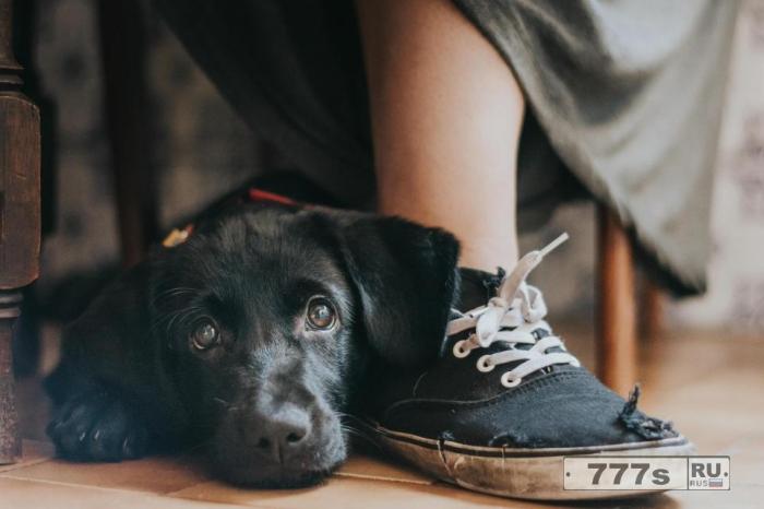 Фотографии, сделанные любителями собак со всего мира, завоевали сердца судей в ежегодном конкурсе.