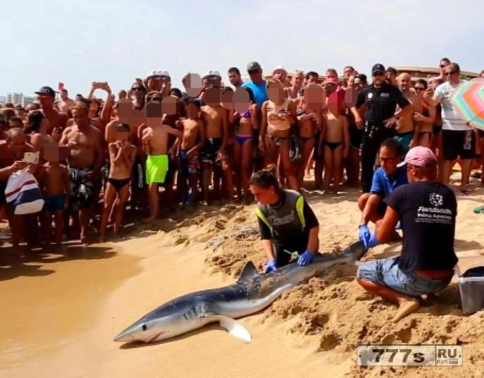 Море на Майорке очень опасное, 2,5-метровая акула бродила у побережья.