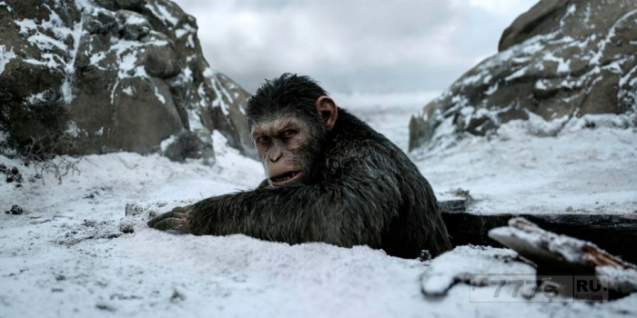 «Планета обезьян: Война» - захватывающий конец феноменальной трилогии.