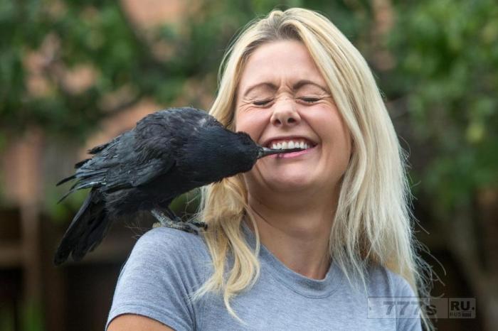 Любительница птиц взяла домой раненного грача, назвала его Расселом Кроу и построила для него птичник за 2000 фунтов стерлингов.