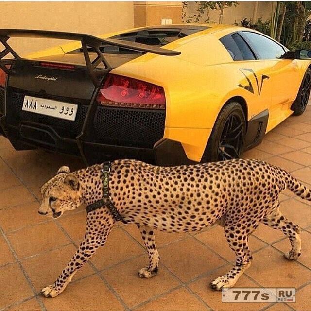 Богатые дети Саудовской Аравии выставляют напоказ кучу денег, демонстрируя свой щедрый образ жизни.