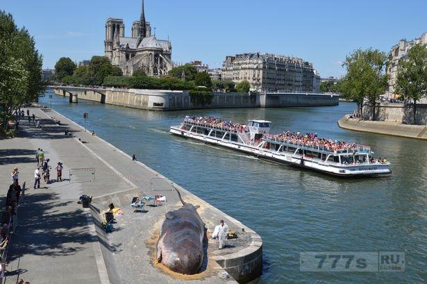 В центре Парижа найден кит, но как он оказался на берегах реки Сены?