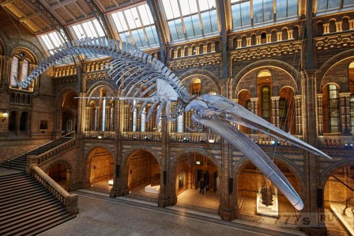 Что будет с голубым китом и что придет на замену Диппи в Музее естественной истории?