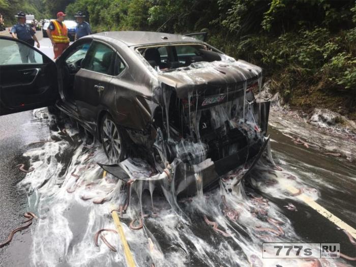 Автомобили выглядят так, как будто их атаковали инопланетяне больные насморком.