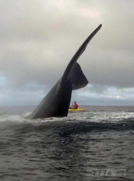 Братья байдарочники столкнулись с 15-метровыми 60-тонными китами, к которым они даже «смогли прикоснуться».