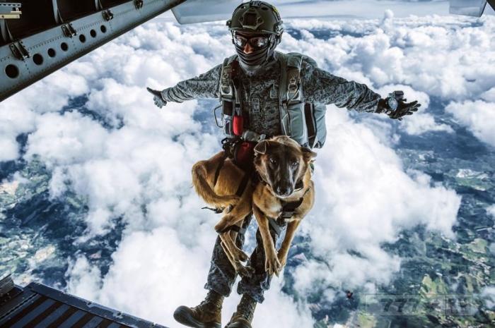 Невозмутимый пес «прыгает» с высоты 4200 метров для завершения обучения в элитном подразделении.