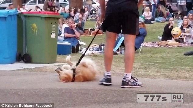 «Кажется ваша собака сломалась!»