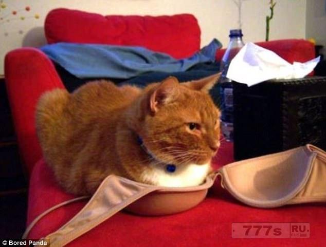 Еще раз смотрим смешные фотографии, как кошки куда только не залазят (новая подборка).