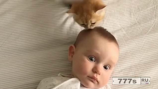 Очаровательный ребенок нашел удивительного парикмахера в любящей кошке Ириске.