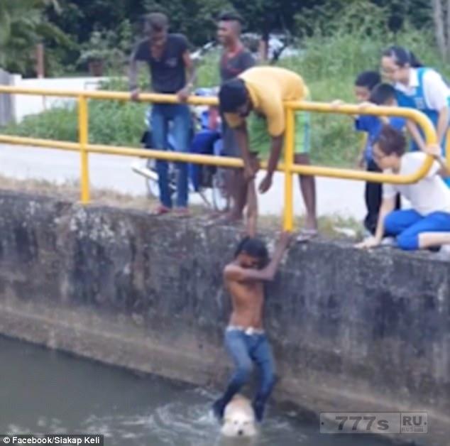 Мужчина спасает утопающую собаку, вытаскивая её из канала, используя свои ноги.