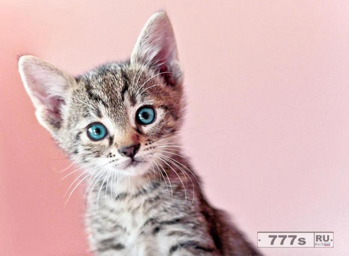 Вы когда-нибудь задумывались, почему кошки мурлычат?