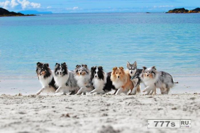 Потрясающая «случайная» фотография семи собак, стоящих по прямой, будто они собираются танцевать канкан.