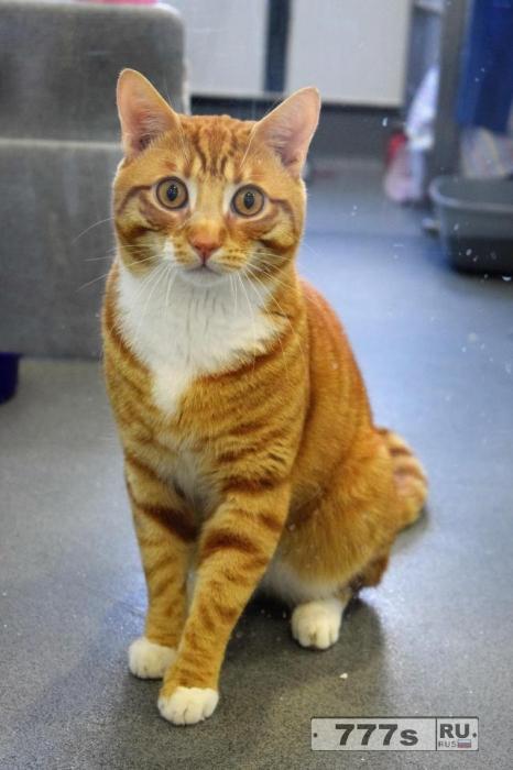 Кошек не допустили в Британский Парламент.