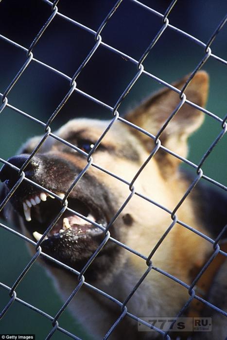 Бывшие преступники говорят, что лучшими сдерживающими факторами от ограбления дома являются камеры видеонаблюдения, лающие собаки и работающий телевизор.