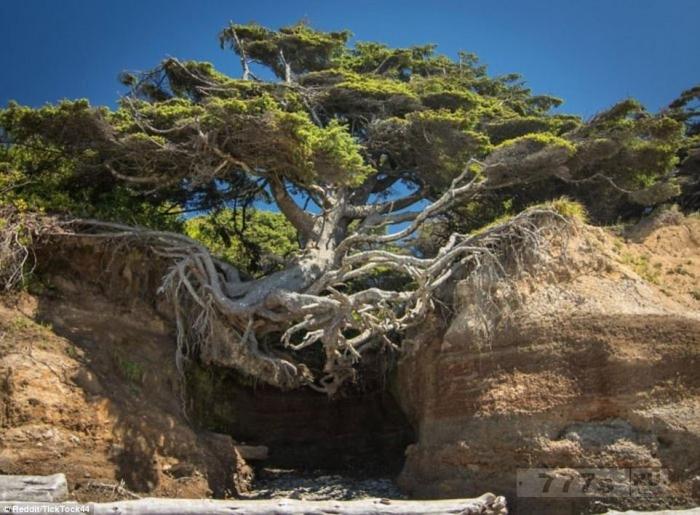 Удивительные фотографии показывают деревья, растущие, несмотря на почти невозможные шансы.