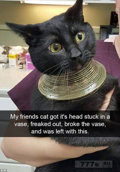 Владельцы домашних животных делятся веселыми фотографиями своих очень нахальных кошек.