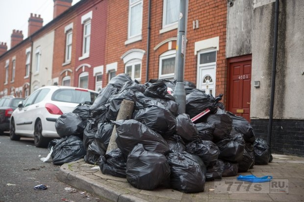 Чума от крыс может вторгнуться в дома Великобритании из-за скопившегося мусора.
