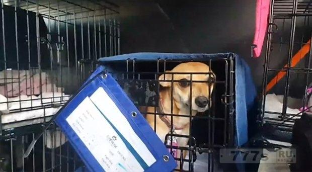 Познакомьтесь с очаровательными собаками, спасенными от урагана Харви.