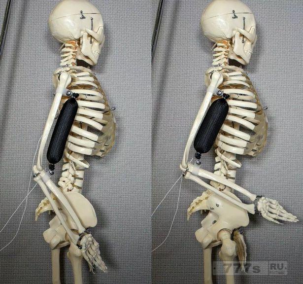 Произошел прорыв в создании роботов-гуманоидов, потому что инженеры создали синтетические мышцы.
