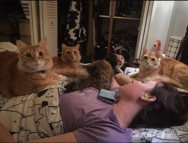 Люди, имеющие нескольких домашних животных, разместили очаровательные снимки.