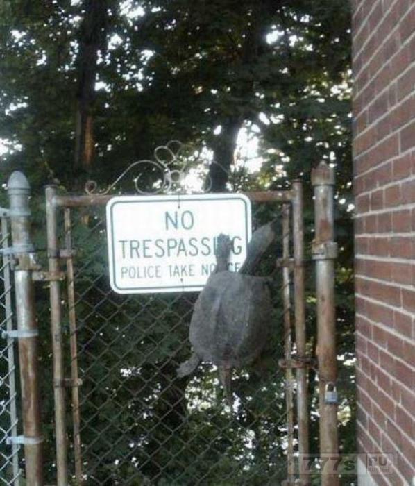 Люди делятся фотографиями своих непослушных домашних животных, нарушающих правила ...