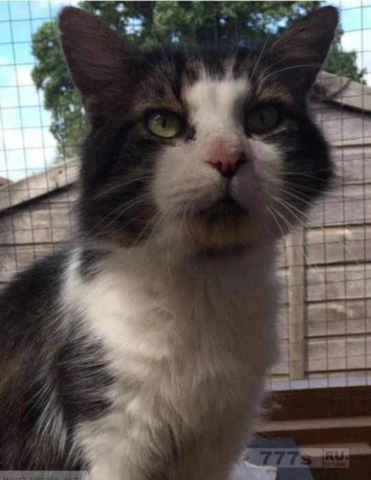 Это самые нежелательные кошки Великобритании и все они нуждаются в любящем доме после того, как провели годы в приютах для животных.