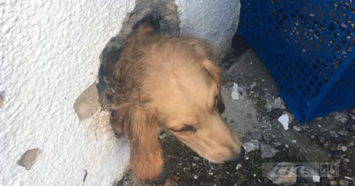 Собаку спасли пожарные после того, как она застряла в вентиляционном отверстии.