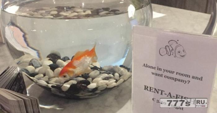 Отель позволит вам арендовать рыбку, если вам будет одиноко в своей комнате ночью.