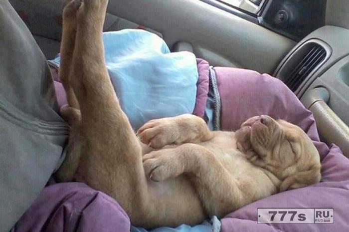 Веселые снимки показывают, что происходит, когда вы позволяете собакам спать
