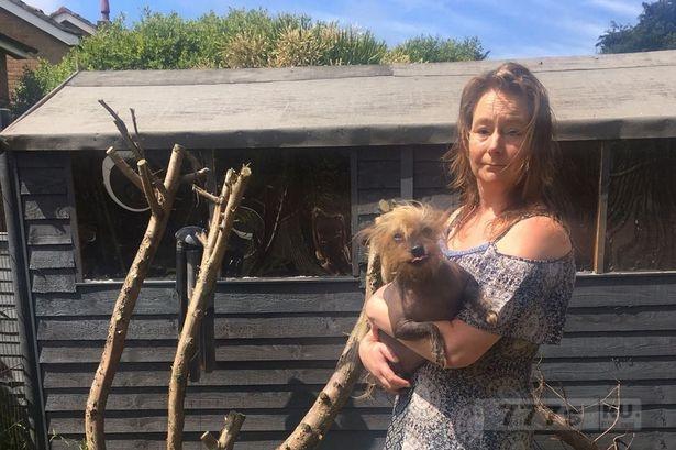 Женщина, борется за жизнь после того, как ее растоптала корова во время прогулки с собакой.