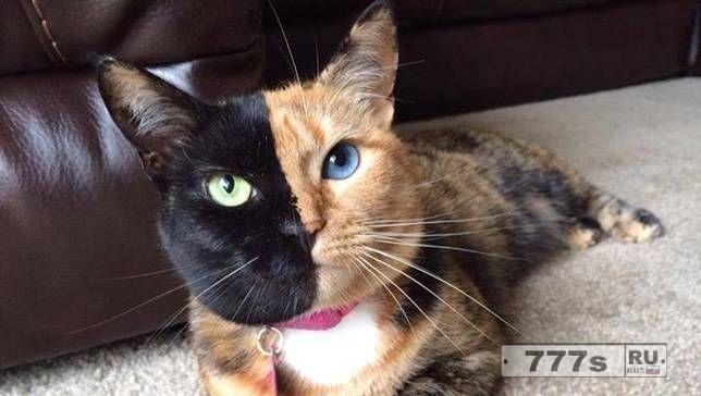 Да, любители кошек, вы действительно можете воспитать свою кошку.