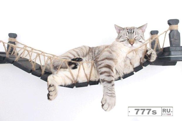 Супружеская пара построила удивительный мост Индианы Джонса для своей кошки.