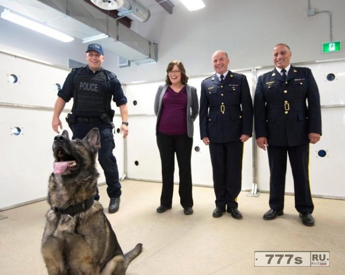 Полицейская собака находит пистолет и случайно из него стреляет.