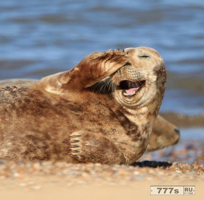 Этот счастливый тюлень - то, что мы все должны видеть, чтобы улучшить настроение
