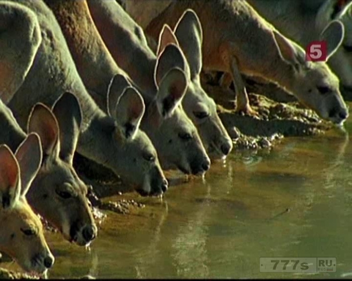 В Австралийских городах скоро может быть очень жарко летом.