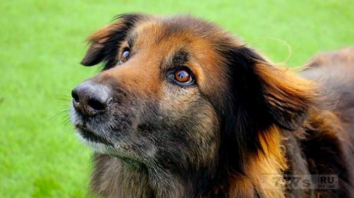 Собака наконец обрела свой «настоящий дом», проведя 10 лет в приюте.