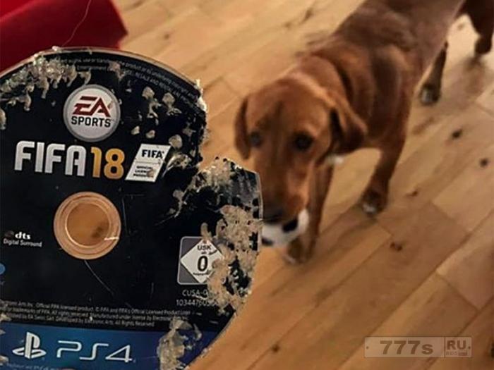 Мужчина пришел домой и обнаружил, что его собака съела диск игры ФИФА 18