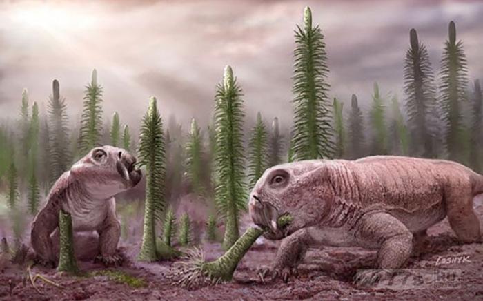 Этот странный морж-ящерица-собака может содержит разгадку спасения всех нас, утверждают ученые