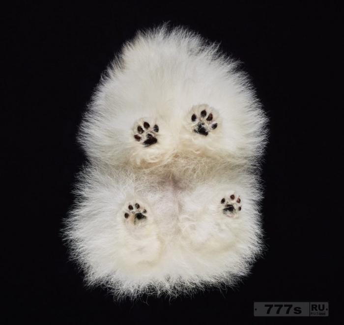 Веселые фотографии показывают собак, с той стороны откуда вы их никогда не видели.