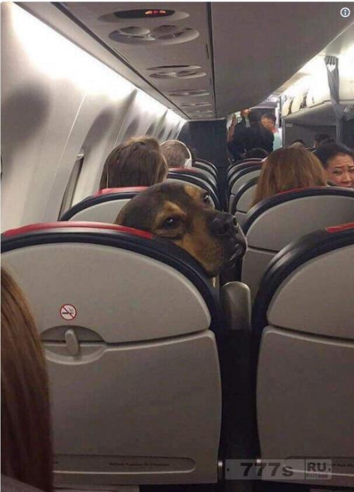 Кто-то принес собаку в самолет, и людям это понравилось.