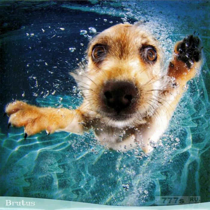 Симпатичных собак сфотографировали ныряющими под воду за шариками.