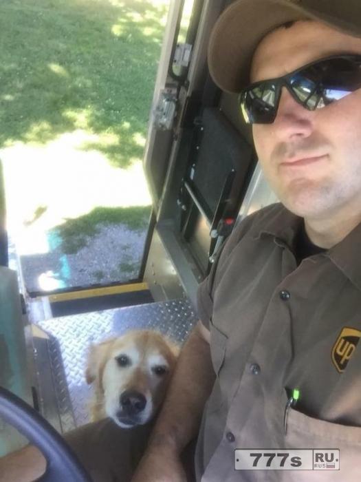 В Фэйсбук есть группа, в которой водители UPS делятся фотографиями хороших собак.