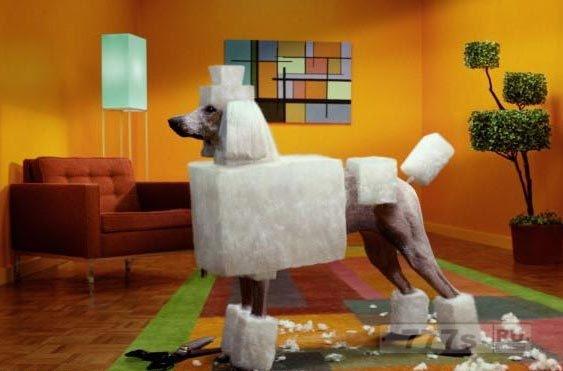 Собаки с квадратными стрижками