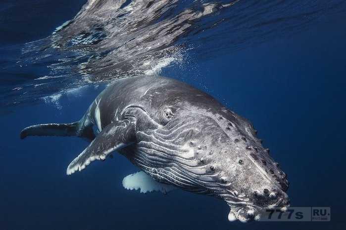 К чему китам надо выплывать из воды