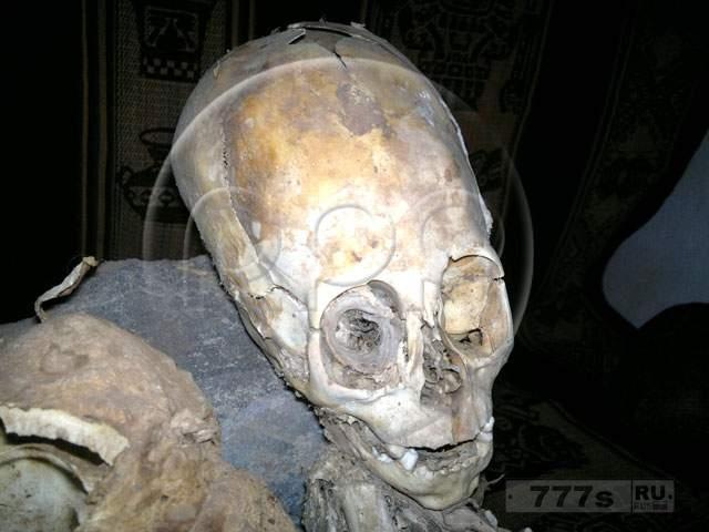 Необычное существо Наска, которое нашли ученые.