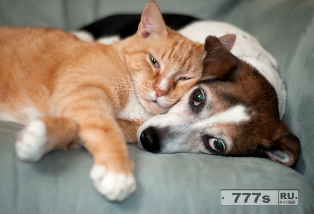 Извините, но собаки на самом деле умнее кошек