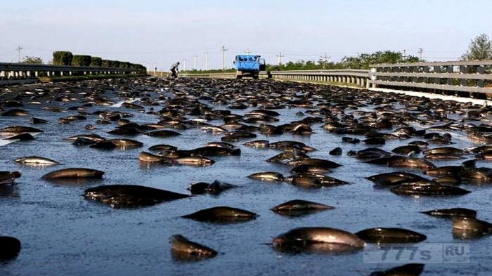 Явление рыбного дождя в Гондурасе