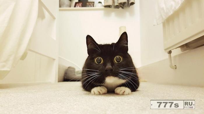 Кошка Зельда напугала своими глазами 30 000 подписчиков Твиттера