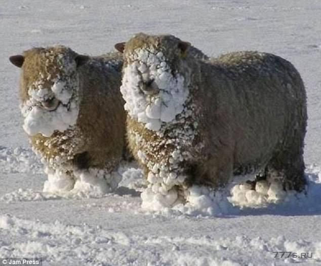 Веселые снимки домашних животных, резвящихся в снегу.