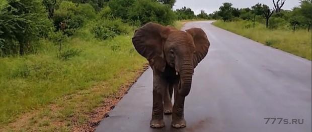 Необычное поведение слоненка